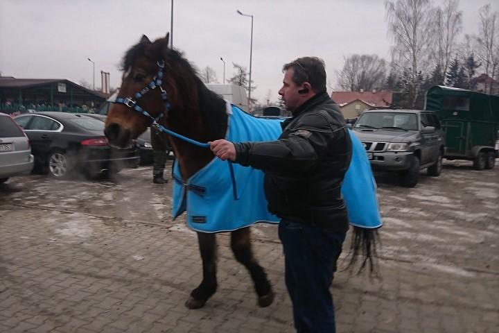 Targ koni wSkaryszewie